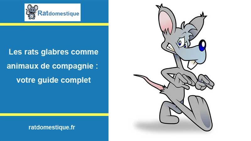 Rat sans poil pour animal de compagnie